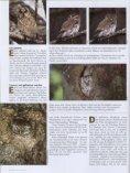 Jäger auf leisen Schwingen - Nationalpark Kalkalpen - Seite 3