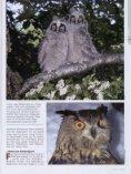 Jäger auf leisen Schwingen - Nationalpark Kalkalpen - Seite 4
