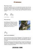 Waldkauz - Tierforscher - Seite 3
