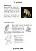 Waldkauz - Tierforscher - Seite 4