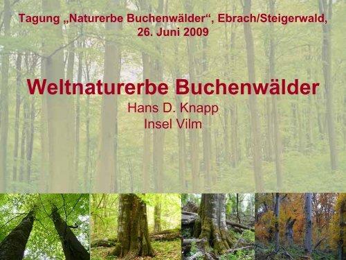 Weltnaturerbe Buchenwälder