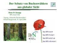 Der Schutz von Buchenwäldern aus globaler Sicht - Bund ...