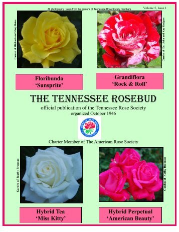THE TENNESSEE ROSEBUD - Tennessee Rose Society