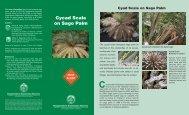 Cycad Scale on Sago Palm - ctahr