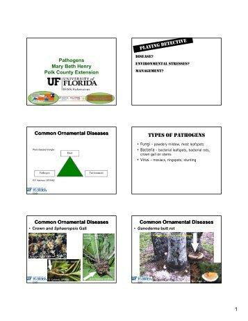 Disease? - Polk County Extension Office - University of Florida