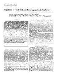 Regulation of Isocitrate Lyase Gene Expression ... - Plant Physiology
