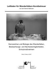 Leitfaden für Wanderfalken-Horstbetreuer - LBV