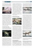 D - Tropenparadies - Page 2