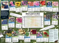 What to plant (& when) - B&Q