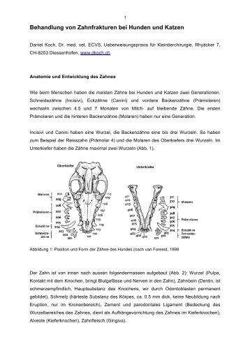 Seite 4 1.3 Skelettale Fe