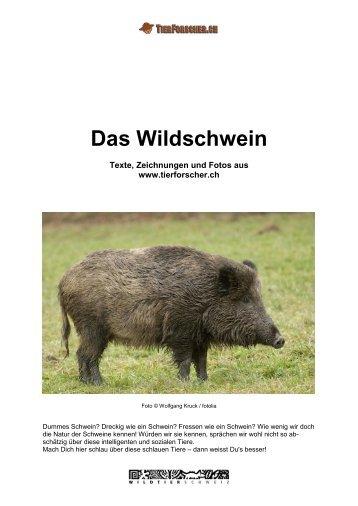 Das Wildschwein - Tierforscher
