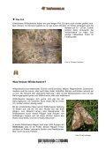 Das Wildschwein - Tierforscher - Seite 5