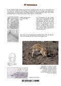 Das Wildschwein - Tierforscher - Seite 6
