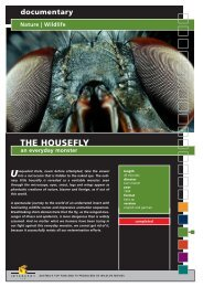documentary Nature | Wildlife THE HOUSEFLY an ... - Interspot Film