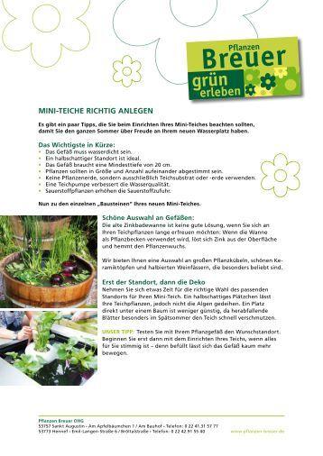 hortensien richtig pflanzen und pflegen gartenbaumschule timm. Black Bedroom Furniture Sets. Home Design Ideas