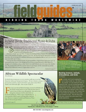 Ireland: Birds, Traditional Music & Pubs - Field Guides