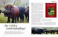 Die Auerochsen in den Runen - Niederhoff & Schulz GbR