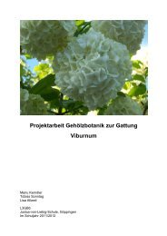Projektarbeit Gehölzbotanik zur Gattung Viburnum - Justus-Von ...