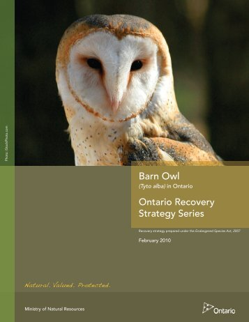 2.0 recovery - Ministry of Natural Resources - Ontario.ca