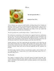 Olives - Zaitoon - Teachislam.com