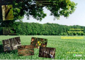 Das Naturschutzgebiet Dalbekschlucht - BUND