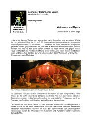 Bochumer Botanischer Verein Weihrauch und Myrrhe