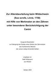 Zur Altersbeurteilung beim Wildschwein - Justus-Liebig-Universität ...