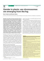 Gender in plants: sex chromosomes are emerging from the fog