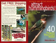 Lure hummingbirds to your yard with these simple tips.