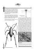 Auckland Museum INSECTS - Page 6