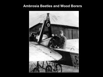 Ambrosia Beetles and Wood Borers