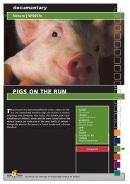 documentary Nature | Wildlife PIGS ON THE RUN - Interspot Film