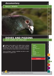 documentary Nature | Wildlife DOVES AND ... - Interspot Film