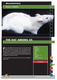 documentary Nature | Wildlife THE RAT AMONG US - Interspot Film