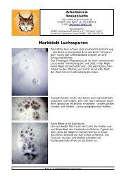 Merkblatt Luchsspuren Seite 1.odt - Arbeitskreis Hessenluchs