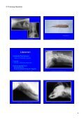 Trachea Lumen Einengung - Seite 4