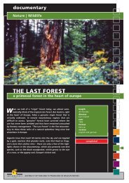 documentary Nature | Wildlife THE LAST FOREST a ... - Interspot Film