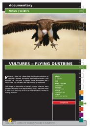 Wildlife VULTURES – FLYING DUSTBINS - Interspot Film