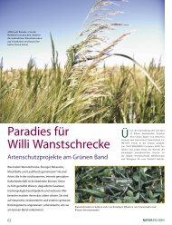Spenden und Grüne Band-Anteilscheine - BUND für Umwelt und ...