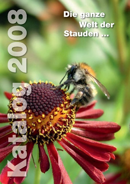 "Pflanze im 9x9cmTopf Bunte Margerite Chrysanthemum cocineum /""Robinson Rot/"""