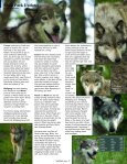Farewell Socrates - Wolf Park - Page 3