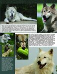 Farewell Socrates - Wolf Park - Page 5