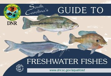 Guide to Freshwater Fishes - Department of Natural Resources ...