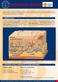 documento de consenso - Page 3