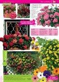 Immerblüher! ...unsere robusten - Blumenwelt Hödnerhof - Seite 2
