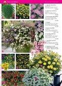Immerblüher! ...unsere robusten - Blumenwelt Hödnerhof - Seite 3