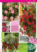 Immerblüher! ...unsere robusten - Blumenwelt Hödnerhof - Seite 4