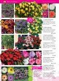 Immerblüher! ...unsere robusten - Blumenwelt Hödnerhof - Seite 5