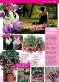 Immerblüher! ...unsere robusten - Blumenwelt Hödnerhof - Seite 6