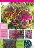 Immerblüher! ...unsere robusten - Blumenwelt Hödnerhof - Seite 7